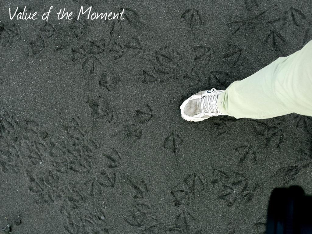 Footprints of seagulls on the black sand, Russia, Kamchatka, Petropavlovsk Kamchatskiy